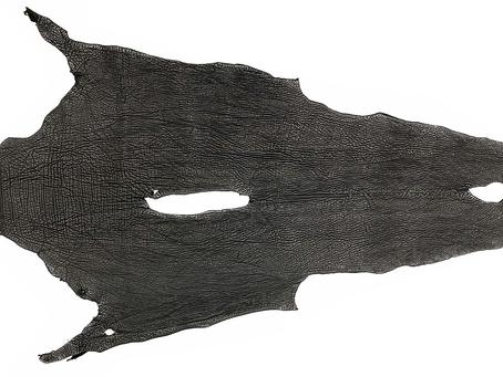 サメ(シャークスキン)