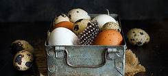 hicken-and-quail-eggs-in-a-box-PDD2XM2_e