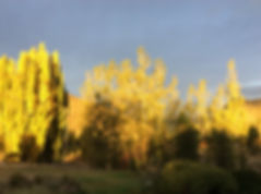 Autumn sunset, fabulous colours at Pip's Orchard Bed & Breakfast, Gibbston Valley