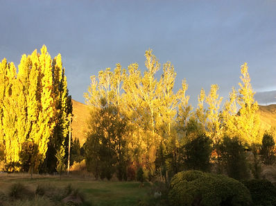Autumn sunset, fabulous colours at Pip's Orchard Bed & Breakfast, Gibbston Valley