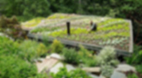 Mill-Valley-Cabins-Sedum-Succulent-Roof.