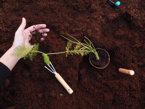 ¿Cómo hacer mi jardín más eco?