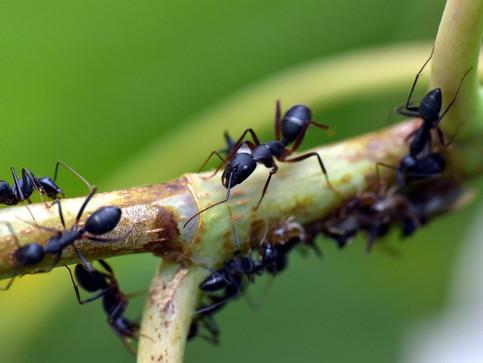 6 formas de eliminar las hormigas del huerto/jardín
