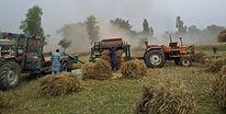 HarvestQuiz_2020(quiz-only).jpg