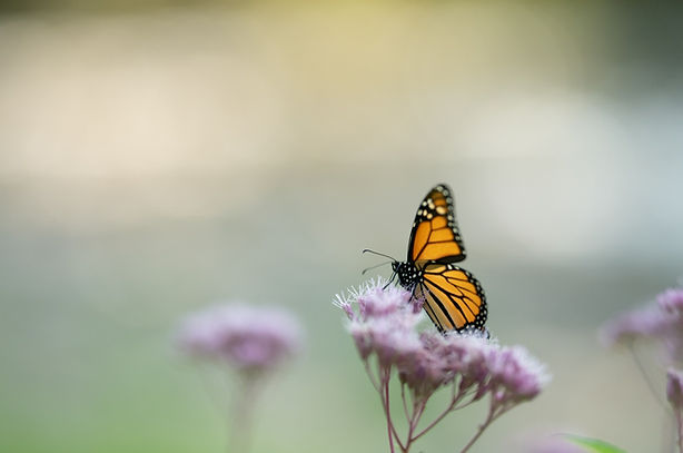 _butterflyIMG_2514_edited.jpg