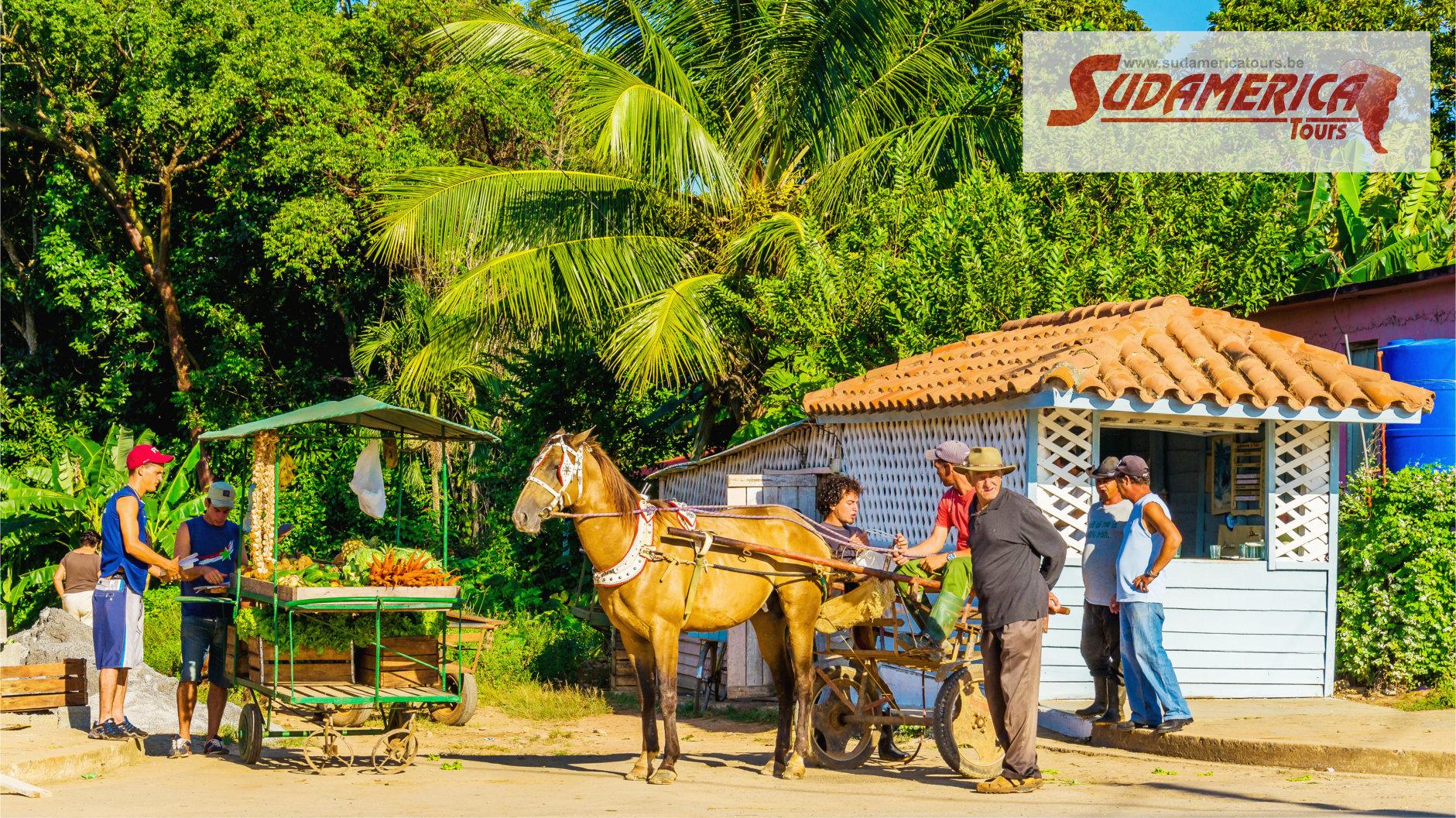 Cuba_Viñales_13
