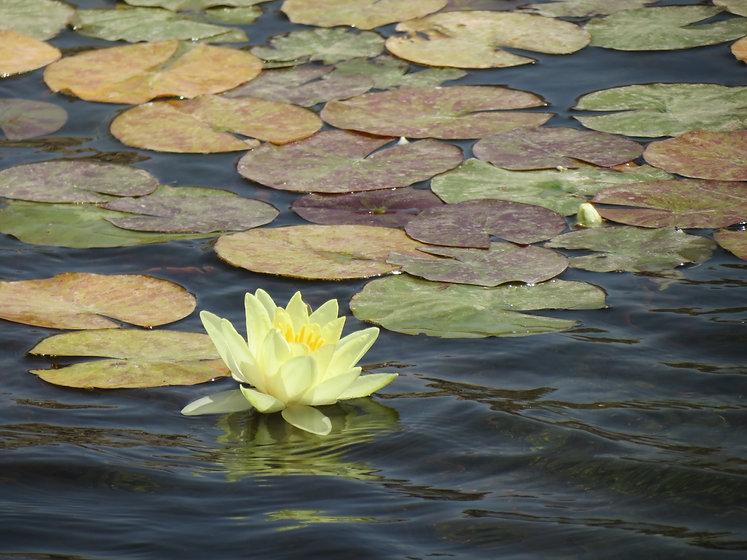 blommor vatten.jpg