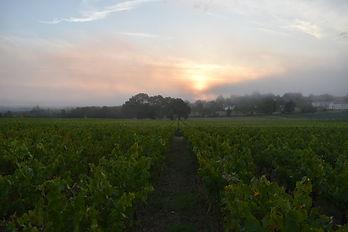 domaine-du-buisson-leve-du-soleil-vigne.JPG