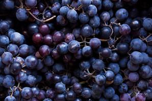 domaine-du-buisson-raisins.jpeg