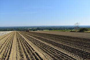 domaine-du-buisson-plantation-2020-1.JPG