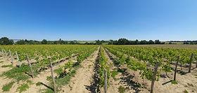 domaine-du-buisson-vigne-printemps-2.png