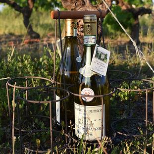 domaine-du-buisson-malvoisie-degustation-vignes.png