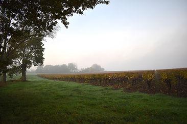 domaine-du-buisson-vigne-automne-1.jpg