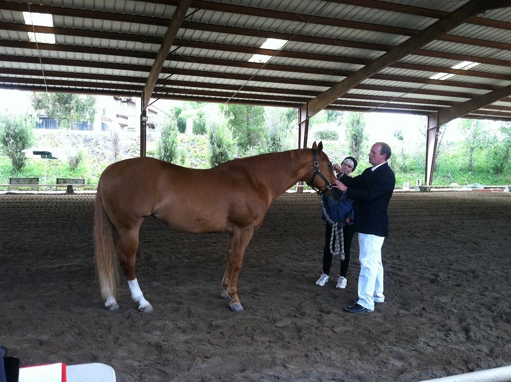 Quarterhorse with good conformation for his job