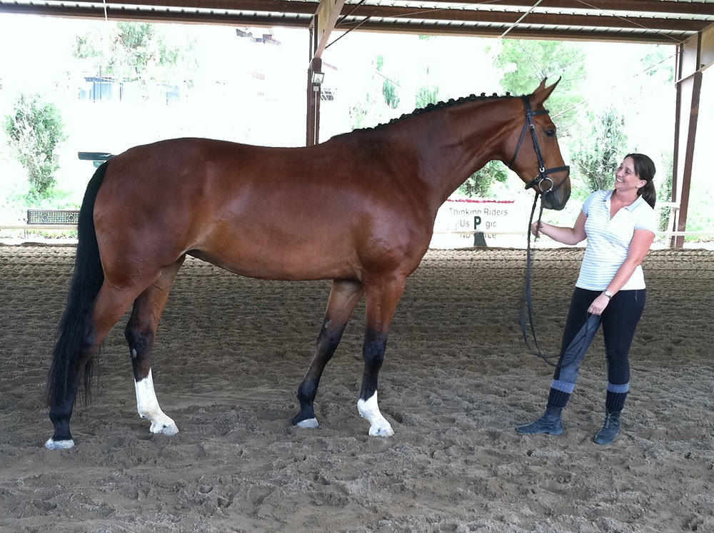 Warmblood with good conformation for her job (Cecile Audinet and Glee)