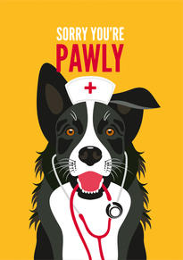 Border Collie Get Well Card
