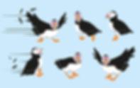 Puffins 2.jpg