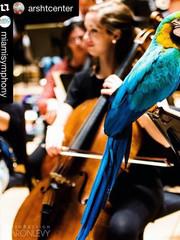 Miami Symphony