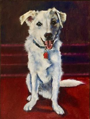 Joey the 3 Legged Dog