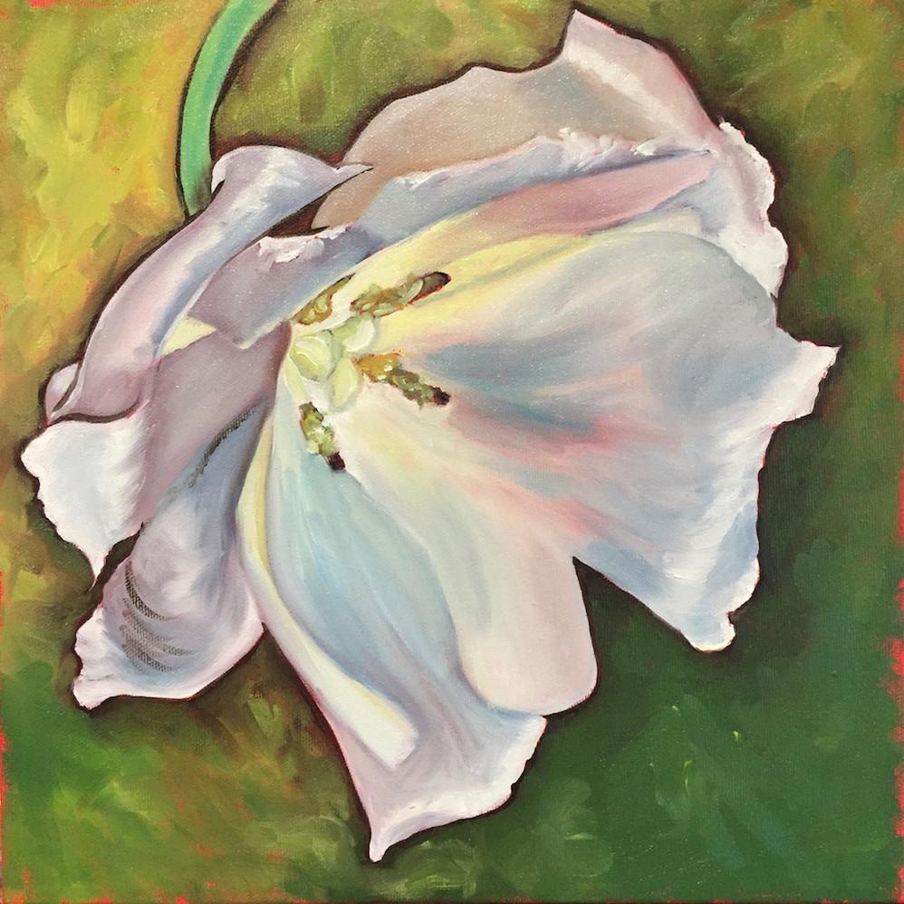 White Tulip on green