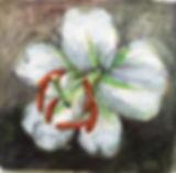 Blume_weiss.jpg