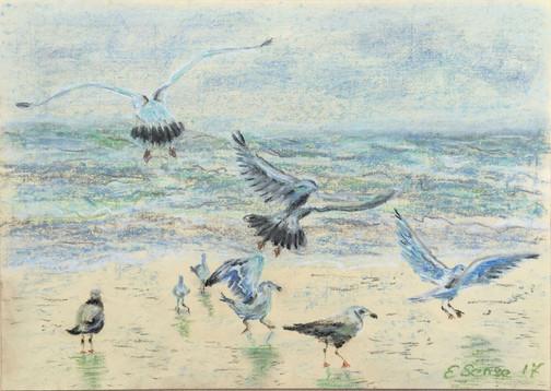 Dance of gulls