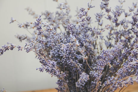 Dried Lavender Central Otago Lombary Cottage