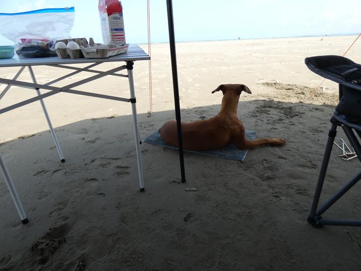 Strandwächter