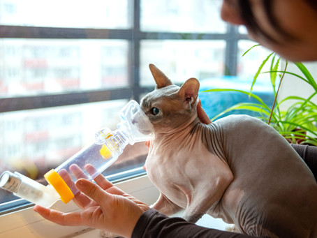 Cats And Asthma
