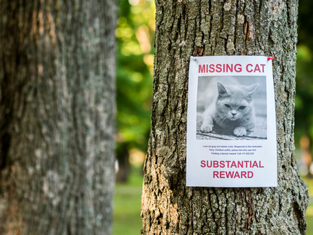 How To Stop My Cat Getting Lost Outside
