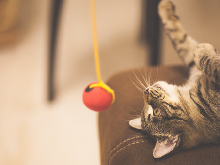 How To Exercise Your Indoor Cat