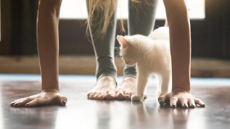 Catlike Yoga Poses