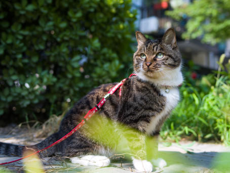 Keeping Your Outdoor Cat Happy And Healthy