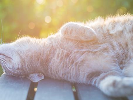 Cats and Sunburn