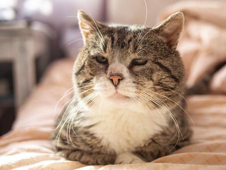 Geriatric Cat Check