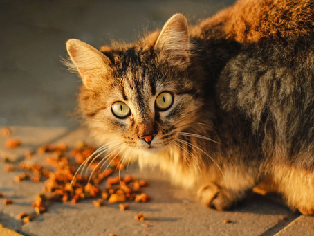What's Wrong With Cat Food