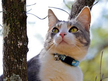 Choosing A Cat Collar