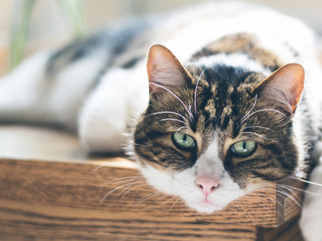 Growing Old Gracefully - Arthritis In Cats