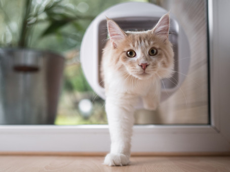 How To Get My Cat To Use A Cat Flap