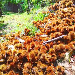 Chestnut running path _ Curral das Freiras #visitmadeira #curraldasfreiras #madeira #madeiraisland #