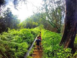 Ribeiro Frio - Portela__Green trails.