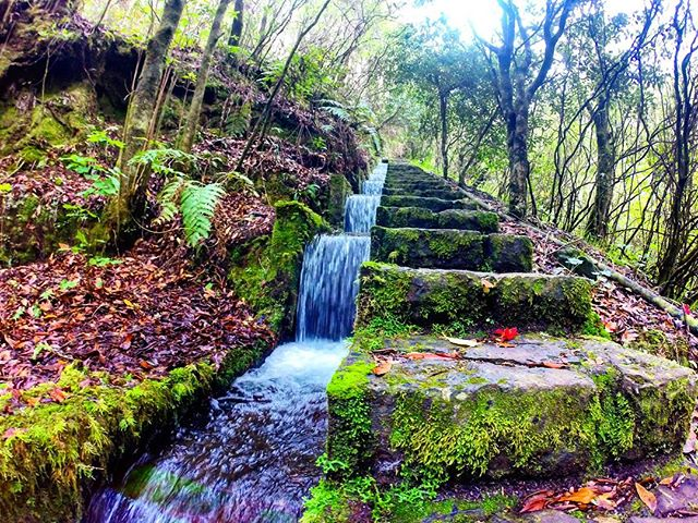 The perks of running the Laurel Forest at the end of 'The Great Descent' - Ribeiro Frio __#gotrailma