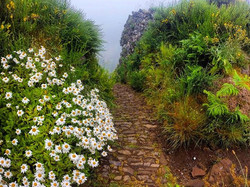 Mother Nature sure knows how to handle and keep our trails beautiful__RUNNiNG TOURS _ MADEiRA ISLAND