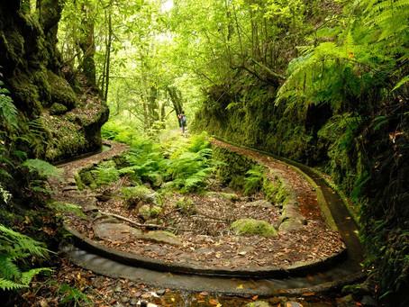 BEST 5 LEVADA WALKS IN MADEIRA ISLAND by blog.madeira.best