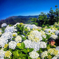 Flower Power ... wait what___RUNNiNG TOURS _ MADEiRA ISLAND__WWW.GOTRAILMADEIRA