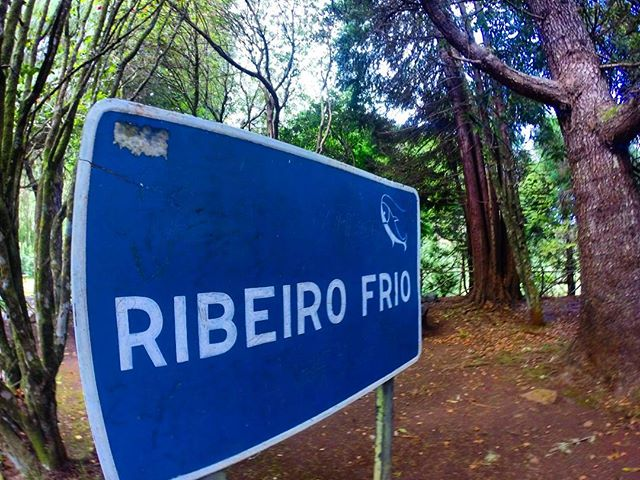 Ribeiro Frio - Mandatory checkpoint for a Laurissilva run__RUNNiNG TOURS _ MADEiRA ISLAND__WWW.GOTRA