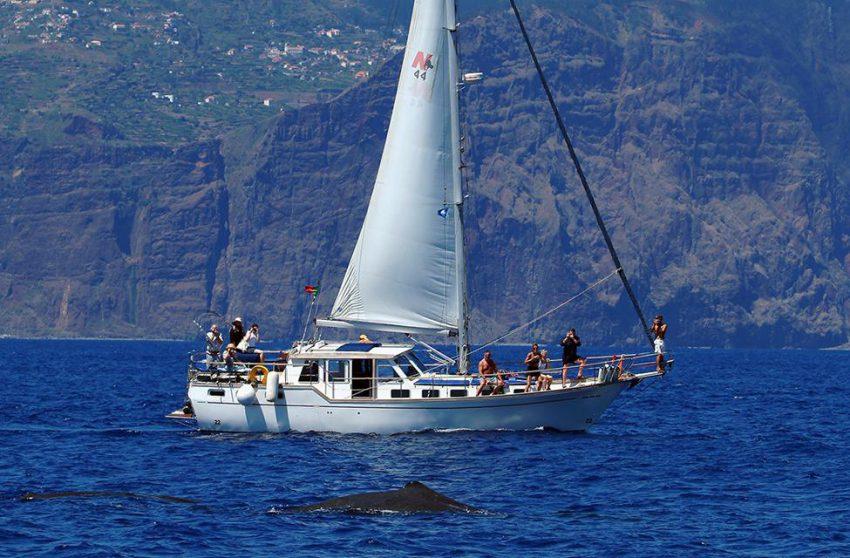 5-gallery-mar-atividade-observacao-de-cetaceos-850x558