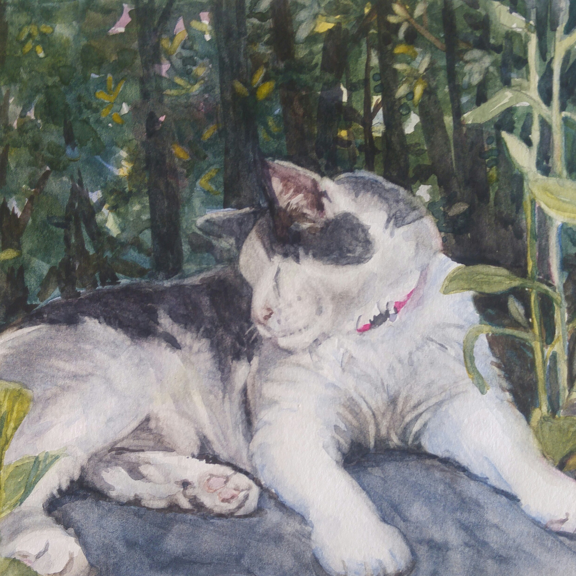 "Gatso in the Garden, 10"" x 8"" watercolor"