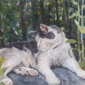 "Gatso in the Garden, 10"" x 8"" watercolor"