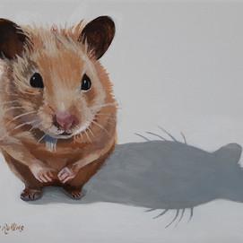 """Honey the Hamster 10"""" x 8"""" acrylic on canvas"""